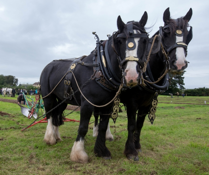 Ploughing 2016 High Res ALF 356