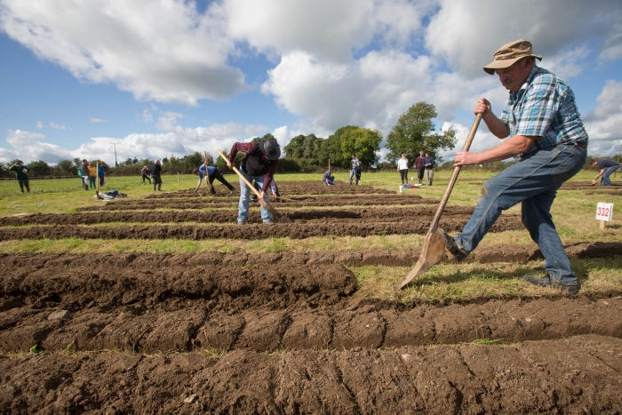 Gerry Mullins, Clare competing in the Loy at the National Ploughing Championships in Screggan. Picture: Alf Harvey.