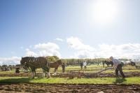Ploughing Day 3 Secreggan 2017 098